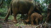 Elephant calf throwing tantrum