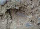 Elephant tusk mark