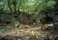 Jungle fowl