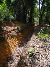 A typical elephant trench