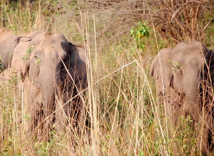 Suspicious elephants
