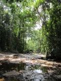 A replenishing monsoon stream